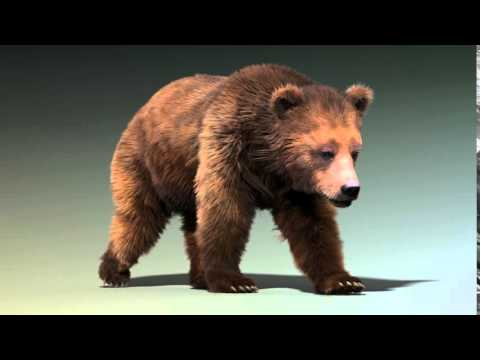Brown bear Ornatrix walk cycle animation | Youtube Search RU