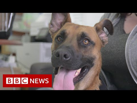 US dog shelters struggle with returns after pandemic adoption boom - BBC News