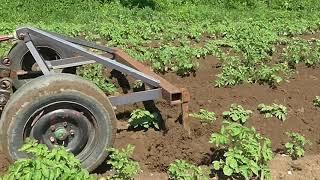 Мой самодельный трактор. 2-е окучивание картофеля.