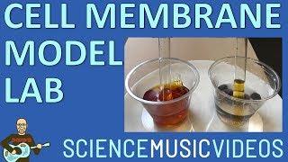 Cell Membrane Model Demonstration Using Dialysis Tubing