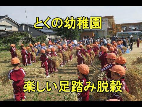 楽しい足踏み脱穀・とくの&津幡とくの幼稚園・2017