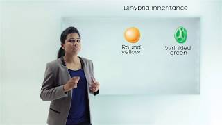 Mendel's Experiment | Dihybrid Cross | Law Of Independent Assortment