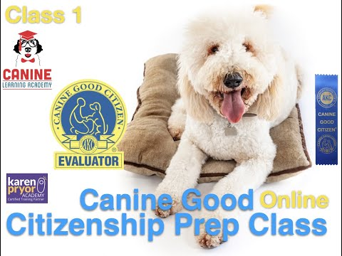 Canine Learning Academy, Canine Good Citizen Prep Online Class ...