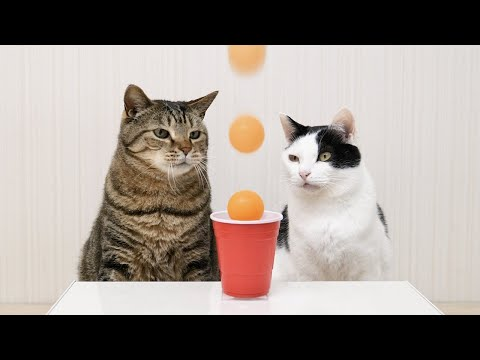 These Cats are Better at Ping Pong Trick Shots than You