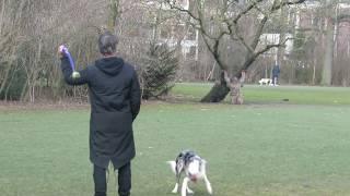 Амстердам - Собака приносит мяч