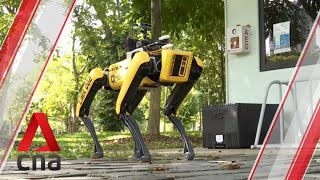 Meet the robot dog promoting safe distancing in Singapore's parks