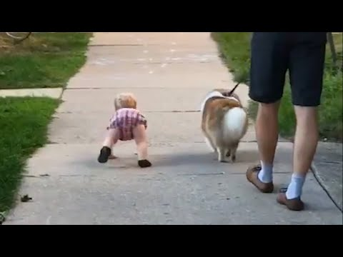 Toddler Walks Like Dog on Sidewalk