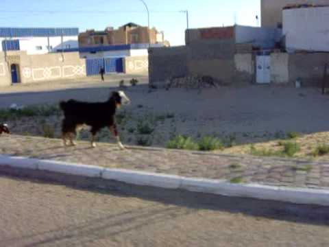 Viaje en 4x4 Túnez mp3