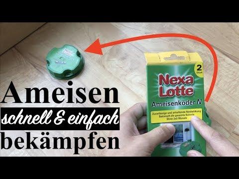 Ameisen bekämpfen: Nexa Lotte Ameisenköder im Test & Review