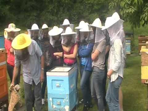 Szkolenie w pasiece mistrza pszczelarskiego Jerzego Koszowskiego
