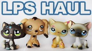 Lps Shorthair Cats On Ebay 免费在线视频最佳电影电视节目 Viveosnet