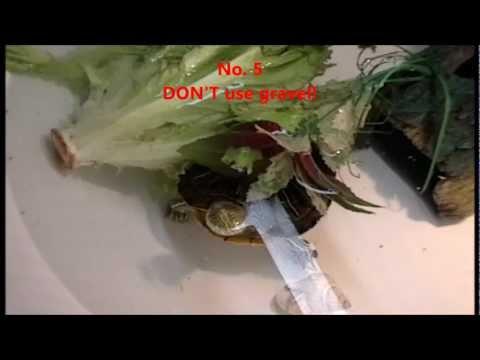 Toe halamang-singaw sakit