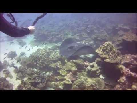 Scuba Diving Isla del Coco