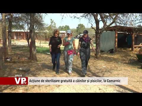 Acțiune de sterilizare gratuită a câinilor și pisicilor, la Comarnic
