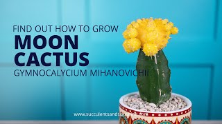 """Learn how to properly care for Gymnocalycium mihanovichii """"Moon Cactus""""!"""