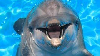 Nicholas - Atlantic Bottle Nose Dolphin at Clearwater Marine Aquarium Florida