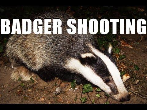Fieldsports Britain – Shooting badgers and wheelchair guns   (episode 150)