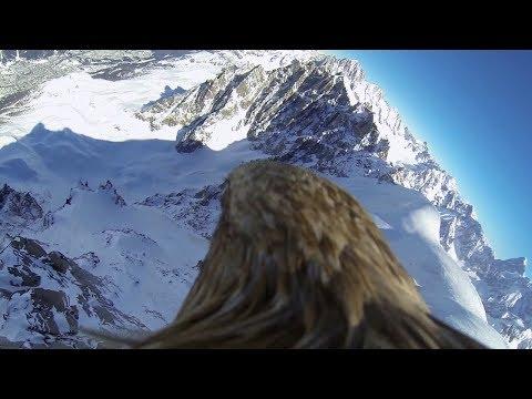 """hqdefault - A vista de pajaro... Un """"paseo"""" a lomos de un aguila por el Mont-Blanc"""