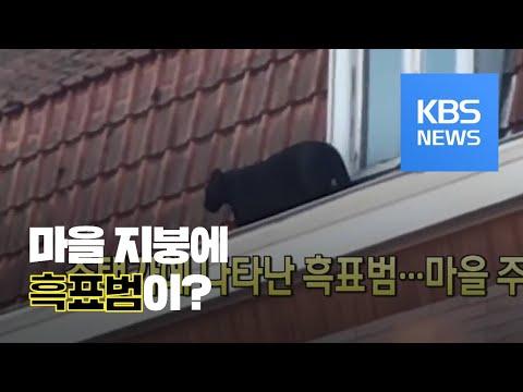 [클릭@지구촌] 주택가에 나타난 흑표범…마을 주민 '긴장' / KBS뉴스(News)