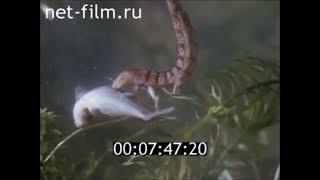 Ловля язя на жука плавунца
