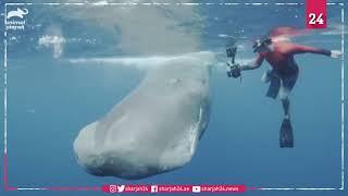 """رصد حوت من فصيلة """"العنبر"""" وهو يصطاد في أعماق المحيط"""