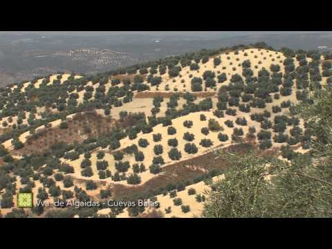 The Great Málaga Path. Stage 15: Villanueva de Algaidas - Cuevas Bajas (English)