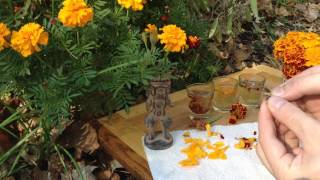 Marigolds Are Colorful Edible Flowers