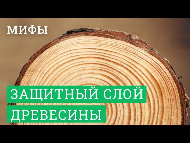 Постер для видео - Сказки про защитный слой древесины в деревянном домостроении