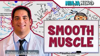 Myology | Smooth Muscle