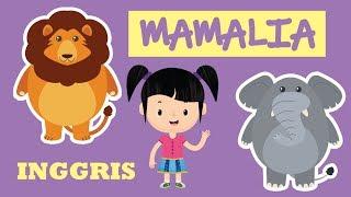 Belajar Mengenal Nama-nama Hewan Mamalia dalam Bahasa Inggris Bagian 1 | Bunbun Learning Mammals