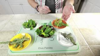 Top 5 Herbs for Healthy Living