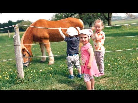 Farm holidays Oberdürnberg