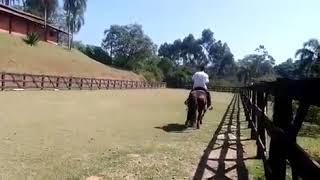 Equídeo Equino Crioulo Registrado Cavalo Preta - e-rural Imagens