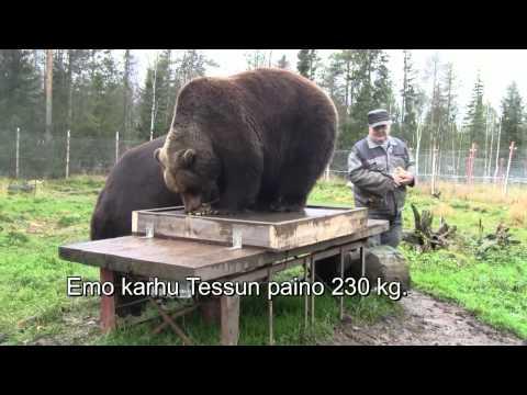 """""""karhu"""" innostuu"""