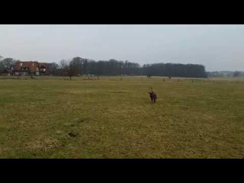 Baloo uns seine Ballschleuder