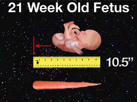 21 Weeks Pregnant | Week 21 Pregnancy