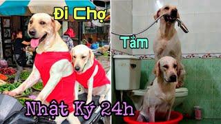 Nhật ký 24h của vợ chồng Củ Cải Kim Chi | What do my dogs do in a day?