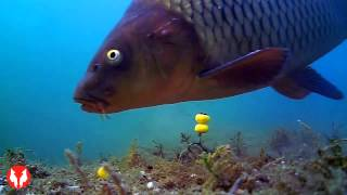 Новая подводная камера Water Wolf underwater camera. Тест в Карпфишинге