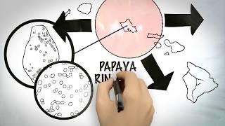 How are GMOs Made? The Genetically Modified Hawaiian Papaya Case Study