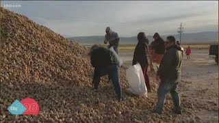 Idaho potato farm gave away potatoes for free so they wouldn't go to waste