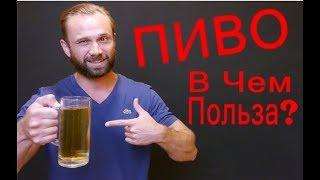 Польза и вред пива для здоровья