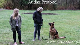 The Audax Protocol For Rehabbing Reactive and Aggressive Dogs