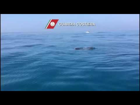 Giochi di delfini 6