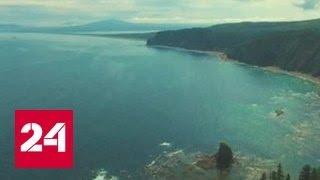13-метровый кит застрял в устье реки в Хабаровском крае