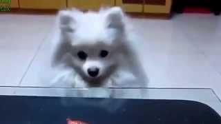 Funny Animals - Laughed A Lot With The Actions Of Animal Humor- Chết Cười Vì Các Chú Chó