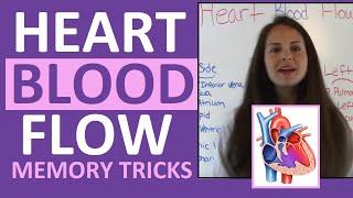 Blood Flow Through the Heart | Heart Blood Flow Circulation Supply