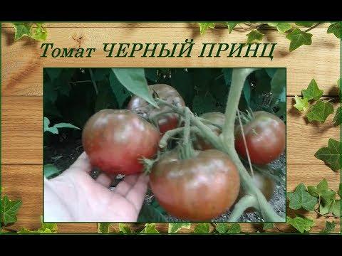 Томат Черный Принц - отличный салатный сорт, неприхотливый и урожайный