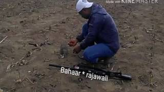 hmongbuy.net - Alap alap tikus Hunting simulation Black winged ...