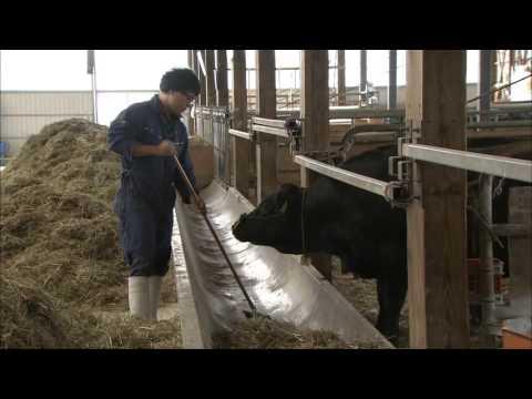 肉畜生産ステーション