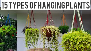 15 തരം Hanging Plants/15types Of Hanging Plants